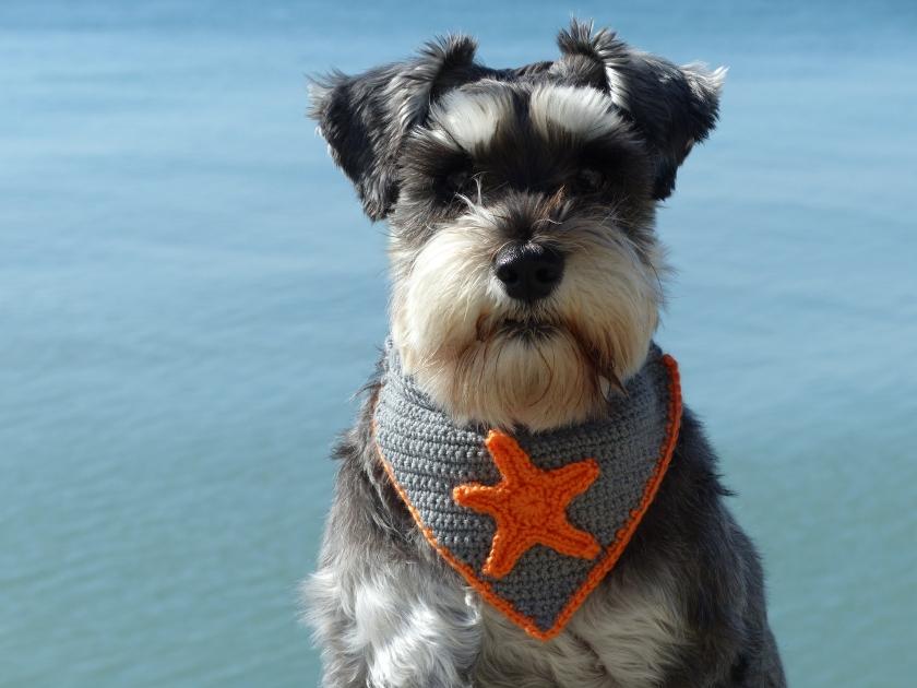 Dog with crocheted bandana
