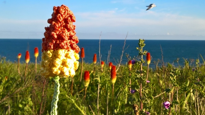 Red hot poker 5