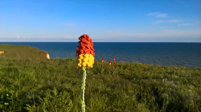 Red hot poker 7